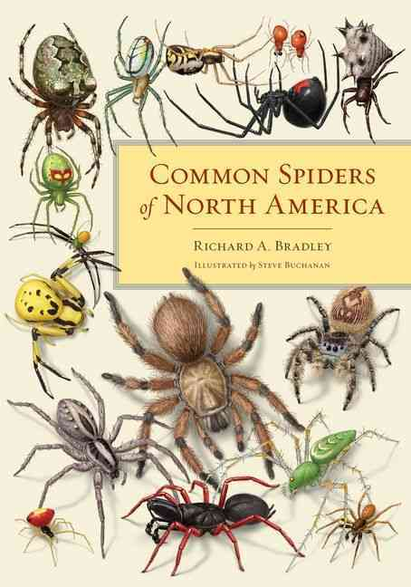 Common Spiders of North America By Bradley, Richard A./ Buchanan, Steve (ILT)